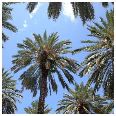 happypalmtrees